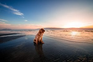 dog-friendly-beach-ca