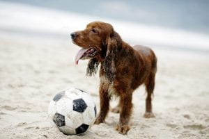 beach-soccer-dog